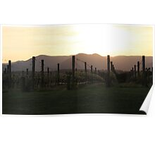 vineyard sunrise Poster