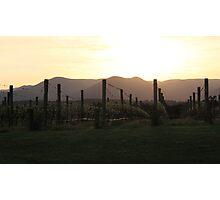 vineyard sunrise Photographic Print