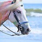 Rainbow Horse  by ©Dawne M. Dunton
