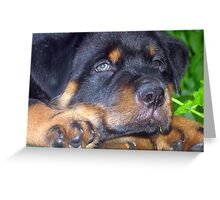 Photographic Portrait Of A Young Male Rottweiler Greeting Card