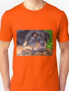 Photographic Portrait Of A Young Male Rottweiler T-Shirt