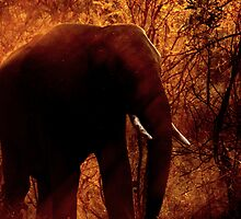 Elephant at sunset 2 by PBreedveld