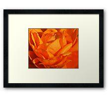 Orange Petals Framed Print