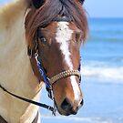 Horse At The Beach 1 by ©Dawne M. Dunton