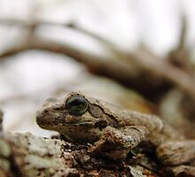 Foam Nest Frog by PBreedveld