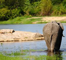 Bull Elephant bath by PBreedveld