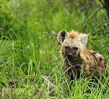 Hyena pups 3 by PBreedveld