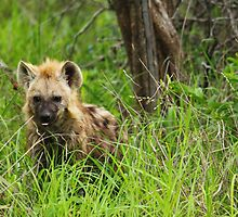 Hyena pups 4 by PBreedveld