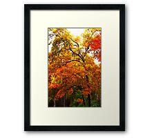 The Oaks Framed Print