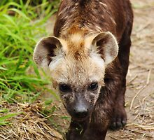 Hyena pups 7 by PBreedveld