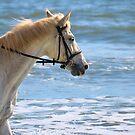 Horse At The Beach 3 by ©Dawne M. Dunton