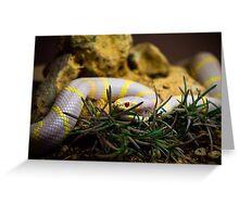 Albino King Snake Greeting Card