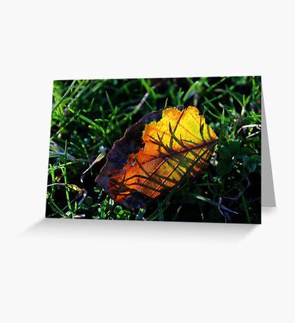 Colourful leaf Greeting Card