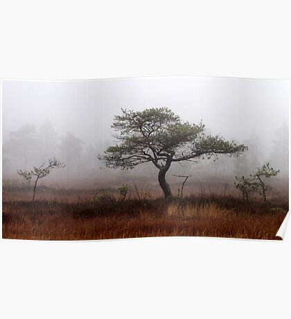 5.11.2012: Old Pine Tree Poster
