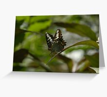 Butterfly Hanging Out Greeting Card