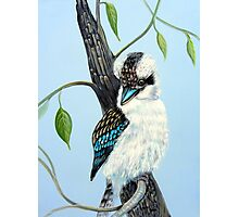 Sitting Pretty, Kookaburra Photographic Print