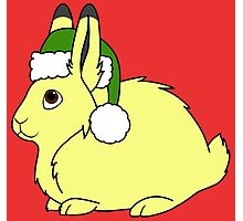 Yellow Arctic Hare with Christmas Green Santa Hat Photographic Print