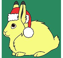Yellow Arctic Hare with Christmas Red Santa Hat Photographic Print