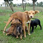 Abandoned mommy dog and puppies by KanaShow