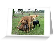 Abandoned mommy dog and puppies Greeting Card