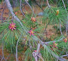 Whispering Pines by Harry Oldmeadow