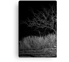 Glimpse in the Desert Night Canvas Print