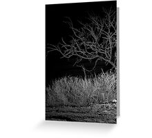 Glimpse in the Desert Night Greeting Card