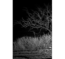 Glimpse in the Desert Night Photographic Print