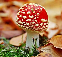 Little Red Riding Hood (fly agaric) by heinrich