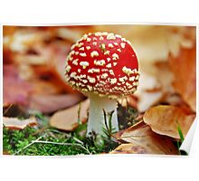 Little Red Riding Hood (fly agaric) Poster