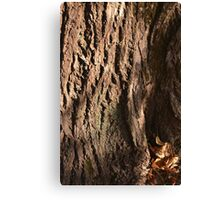 Bark of an Old Tree Canvas Print