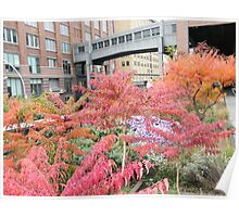 High Line, Autumn Colors, New York's Elevated Garden and Park, New York City Poster