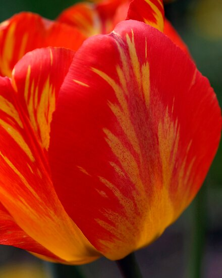 Tulip On Fire! by Gene Walls