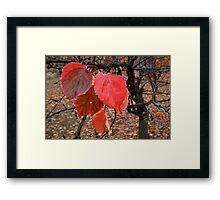 Autumn In The Vineyard Framed Print