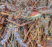 Fish Market: Crawfish at Montagu Beach in Nassau, The Bahamas by Jeremy Lavender Photography