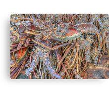 Fish Market: Crawfish at Montagu Beach in Nassau, The Bahamas Canvas Print
