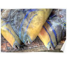 Fish Market: Turbot Fish at Montagu Beach in Nassau, The Bahamas Poster