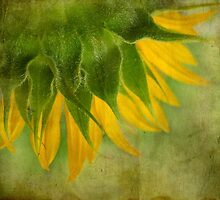 Sunflower by Ivelina Aasen