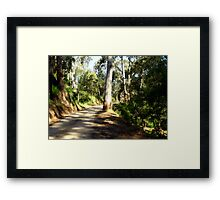 Along a forest Road Framed Print