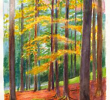 The Black Forest at Hinterzarten by Dai Wynn