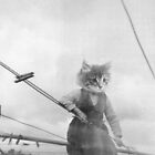 KITTY ON THE CLOTHES LINE by jessnowson