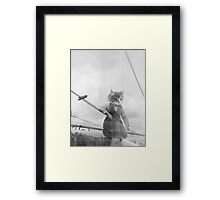 KITTY ON THE CLOTHES LINE Framed Print