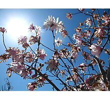 Sunnyy Magnolia Days Photographic Print
