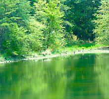 Stream of Green by skyhat