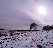 Sun Over A Lone Tree by jpsphotoart