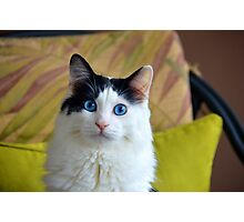 Wondering Kitty, Long Photographic Print