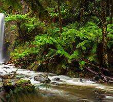 Hopetoun Falls in The Otway rainforest, Australia by hangingpixels