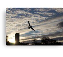 Gull or angel ? Canvas Print