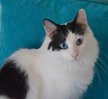 Wistful Kitty by AlynnArts