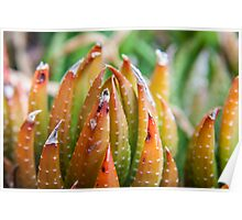 Red Succulent Stem Poster